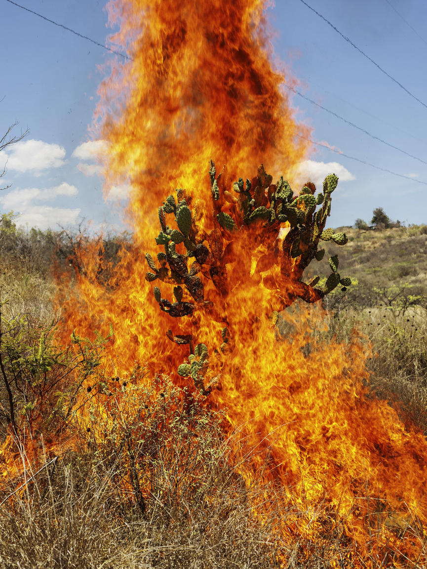Burning Bush, Oaxaca de Juárez, 2018