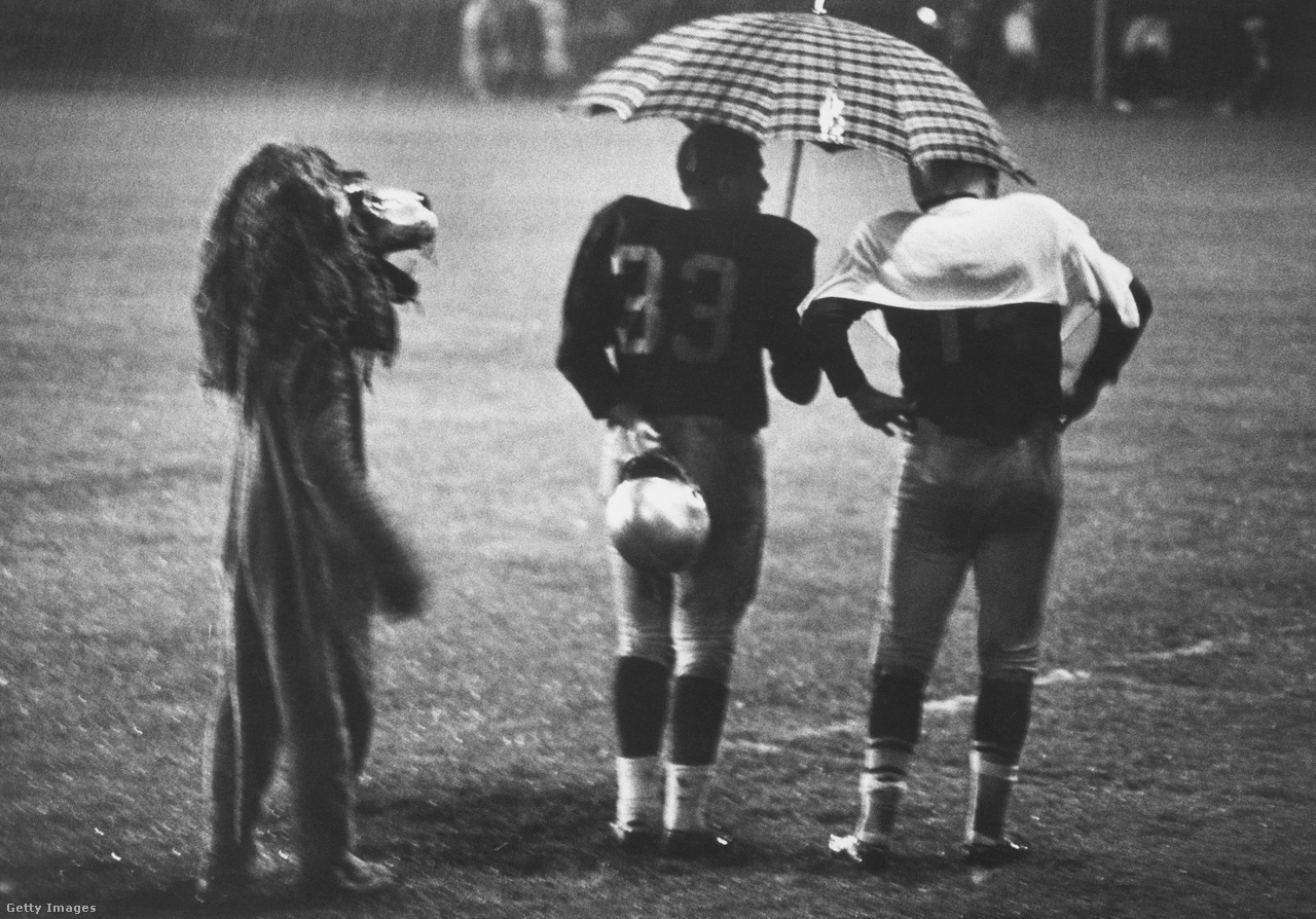 Ez nem a kerületi farsangi verseny döntője, hanem egy 1960-as évekbeli Detroit Lions meccs. Balra Roary, a kabalaoroszlán, középen a fullback Nick Pietrosante, ahogy esernyőt tart az irányító Earl Morrall feje fölé a zuhogó esőben. Akkoriban még nem volt hatalmas kisegítőszemélyzet – ma már van, igaz, esernyőt nem nagyon látunk a játékosok környékén.