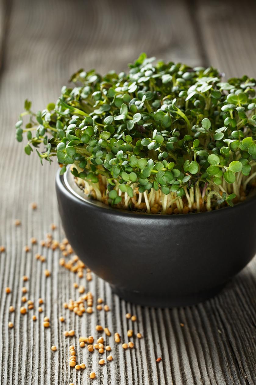A mikrozöldségek az ablakban, tőzeges tápközegben gyorsan megnőnek, miközben tele vannak vitaminnal és ízanyagokkal. Mustár vagy retek is kapható erre a célra.