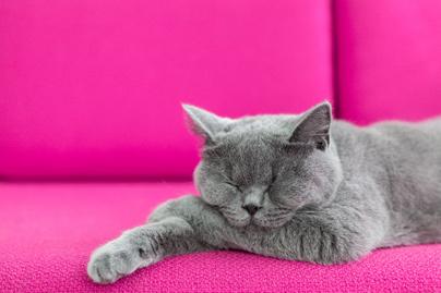 mirol-almodnak-a-macskak