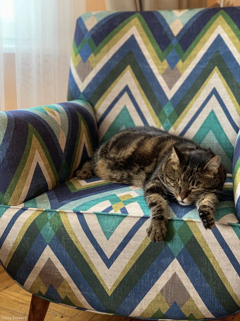 alvo-macska