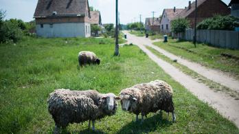 A csörögi romák megkapták az iskolai szegregáció miatt megítélt kártérítésüket
