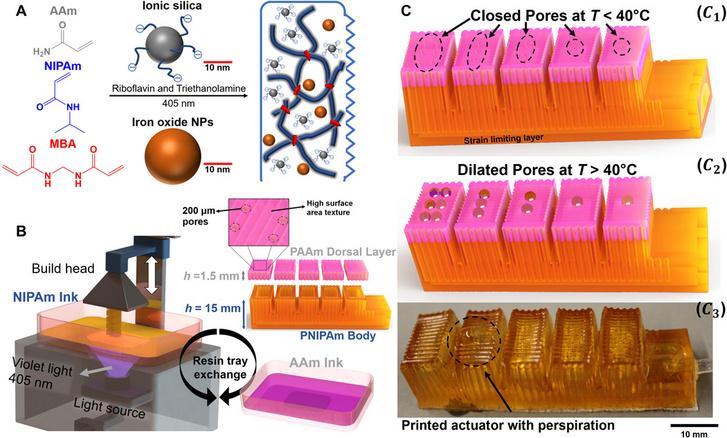 (A) A hidrogél kémiai összetétele. (B) A nyomtató felépítése és az ujjak szerkezeti összetétele. (C) Nagy felületű és több alapanyagból készült 3D-s nyomtatóval készült ujj. (C2) A verejtékezés animált modellje. (C3) Kinyomtatott ujj, ami már hasonlít az animált modellre.