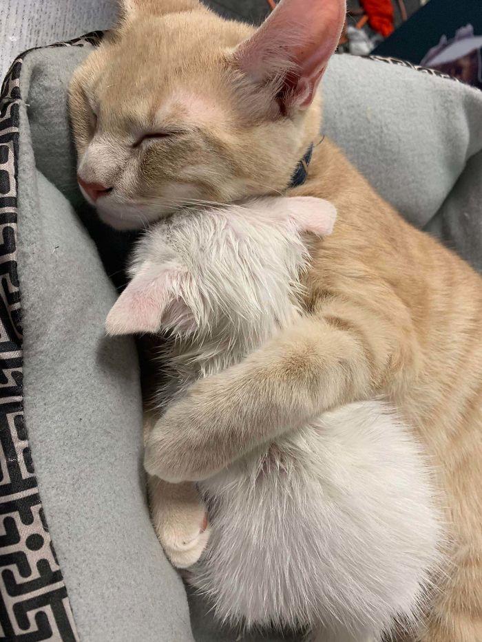 """""""Amikor megmentettem egy síró kiscicát az utcáról, és hazavittem, a macskám megölelgette."""""""