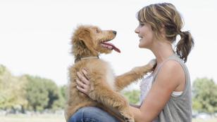 A kutyád gyorsabban rád hangolódik, mint gondolnád