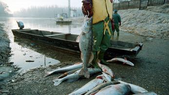 Hallani lehetett a halak segélykiáltásait