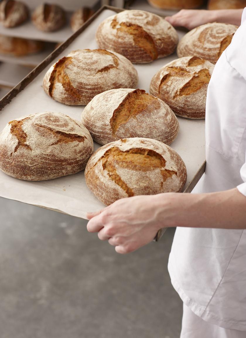 pekaru-pekseg-kenyer