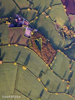 A Gloucestershire melletti szív alakú erdő a magasból