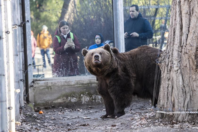 Az állatkertben sok gyermek és felnőtt várta, hogy Balu medve előjöjjön a barlangjából.
