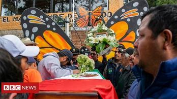 Újabb mexikói pillangóvédőt ölhettek meg