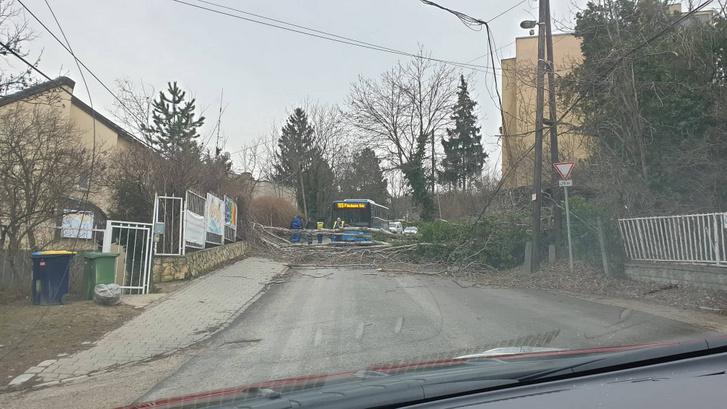 XII. kerület György Aladár utca, kidőlt fa állja el a busz útját.