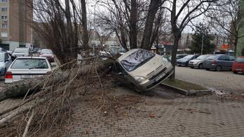 Autókra, utakra zuhannak az erős szél miatt kidőlt fák