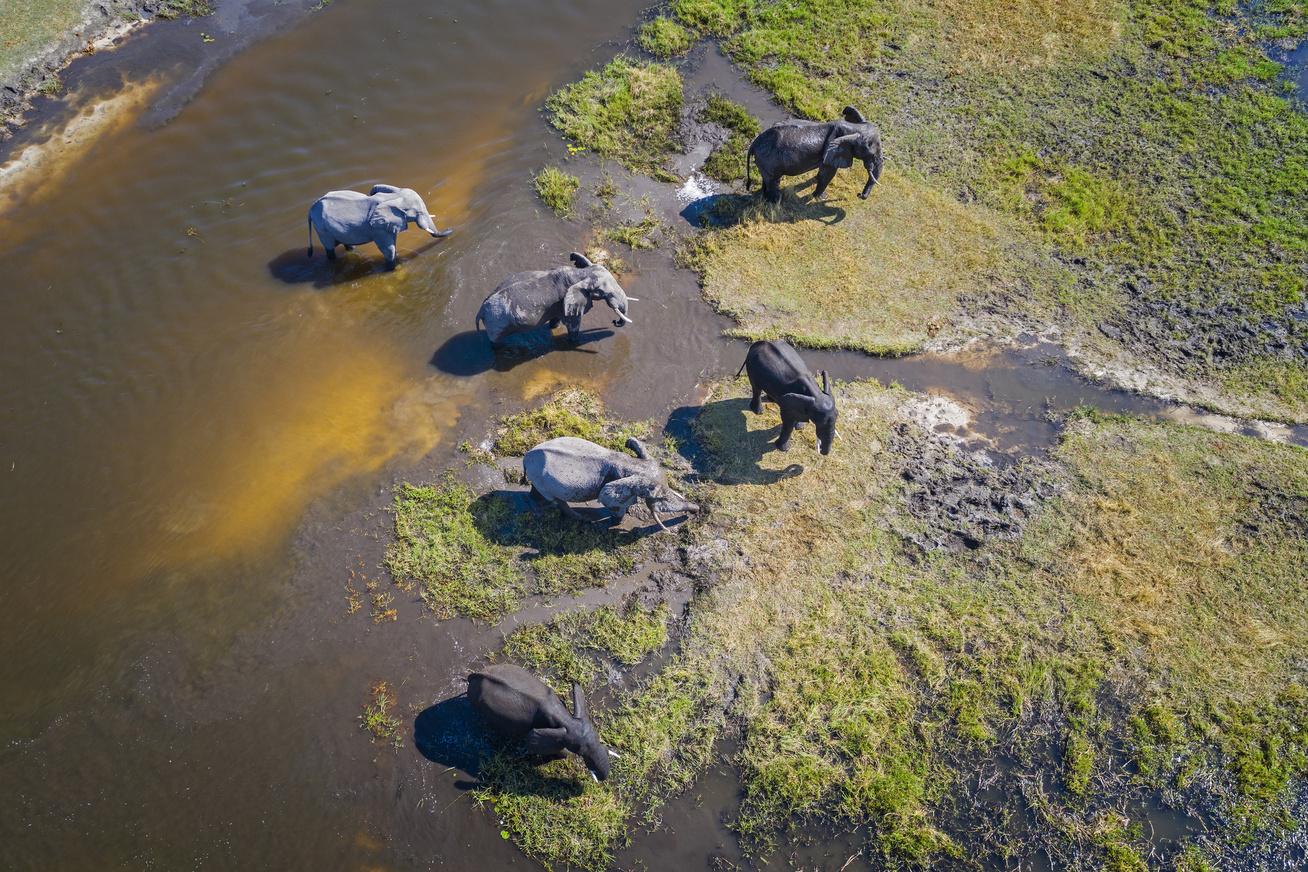 okavango delta elefántok