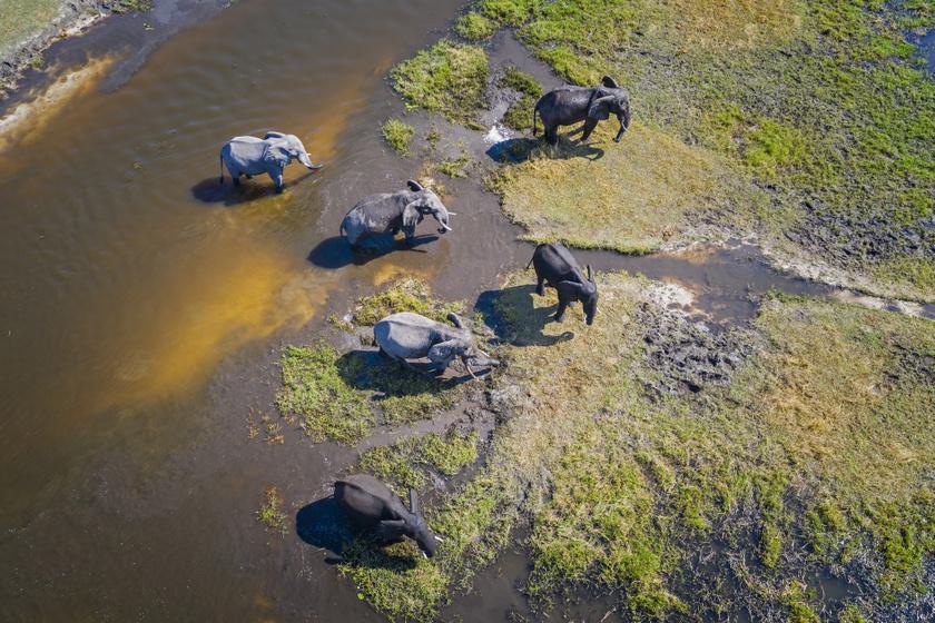 Így néz ki az ember nélküli édenkert Afrikában: különleges helye a Földnek az Okavango-delta