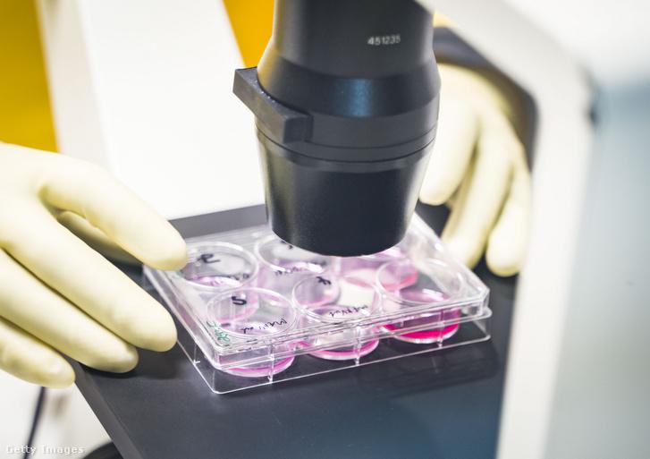 Alkalmazott koronavírus mintákat vizsgál egy magas biztonságú laborban.