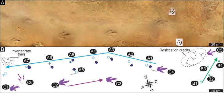 A kőzetben talált lábnyomsorozatok