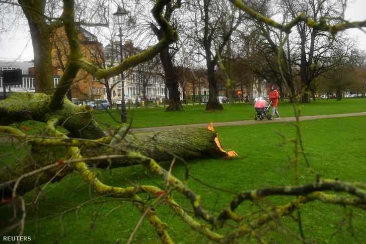 Ciara vihar által kidöntött fa Londonban 2020. február 9-én