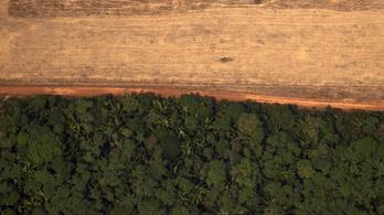 Kétszer annyi esőerdőt vágtak ki Brazíliában, mint egy éve ilyenkor