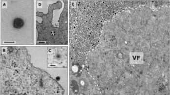 Ismeretlen vírust találtak egy brazil tóban