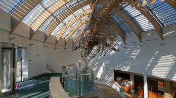 A Természettudományi Múzeumnak mégsem kell ideiglenes helyre költöznie