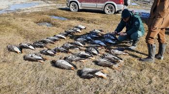 Több mint 250 vadludat megölt a vihar a Kiskunságban