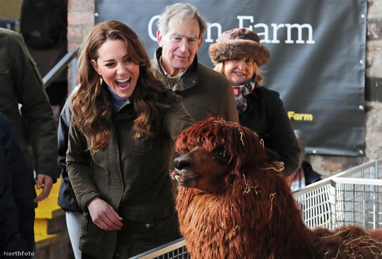 Az alpakka viselkedéséből nem tudunk túl sok következtetést levonni, de az biztos, hogy Kate Middleton nagyon élvezte a farmozást