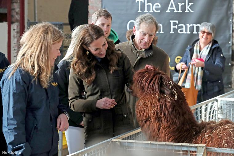 Egy másik állat is elnyerte a hercegné tetszését, a képen épen egy alpakkát simogat