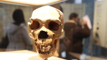 Eddig ismeretlen ősemberek létezésére találtak bizonyítékot Afrikában
