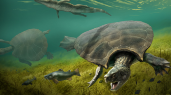 Szarvak is voltak a világ legnagyobb teknősének páncélján