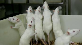 Csökkent a kísérleti állatok száma a kemény EU-s szabályozás miatt