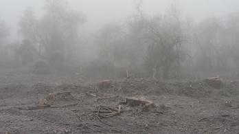 WWF: Engedéllyel sem vághatták volna ki az őshonos fákat Tiszaugon