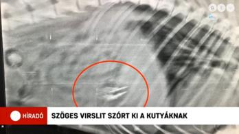 Csavarokkal tömött virslivel öltek meg egy kutyát Dorogon