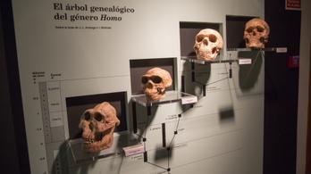Egymillió éve kihalt emberrokont fedeztek fel a DNS-e alapján