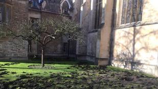 Klímaaktivisták túrták fel a Cambridge egyetem gyepét