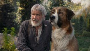 Emberarcú kutya mutatja meg, hogyan kellene élni