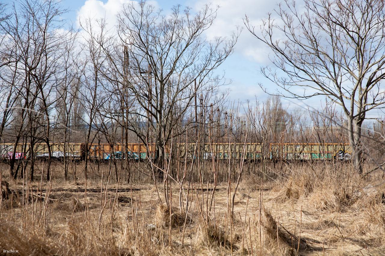 A frissen sarjadt kis erdősáv mögött néhány vasúti munkás egy tehervonat vagonjai körül tesz-vesz. Ez az összes aktivitás a hatalmas területen. Régebben sokkal nagyobb volt a nyüzsgés. Az iho.hu szakblogja szerint a Rákosrendező valamikor Magyarország egyik legforgalmasabb vonalának legnagyobb rendező pályaudvara volt. Az 1800-as évek végén erre, a Bp. Nyugati-Párkány-Pozsony-Bécs vonalon bonyolították le a két főváros közötti személy- és áruforgalom többségét, és itt, Pest határában építették ki az ország akkori legnagyobb teherpályaudvarát. A pályaudvar az 1900-es évek végéig megtartotta vezető szerepét. Mellette épült ki az ország leghatalmasabb fűtőháza az Északi (napjainkban Vasúttörténeti Park). Bár Trianon után jelentősége valamelyest csökkent, Bécs és Budapest között a vonatok az akkorra már részben átépített hegyeshalmi vonalon közlekedtek, továbbra is nagy forgalmat bonyolított le. Az 1990-es évekig ide érkeztek és indultak többek között a dorogi szénvonatok, a pilisvörösvári kő, a környező ipartelepekről bejövő kiszolgáló menetekből itt állították össze az irány, a körvasúti átállító, és a tolatós vonatokat. A Szob felől érkező rengeteg teherkocsit itt rendezték a rakományuk rendeltetésének megfelelő irányvonatokba. A pályaudvarnak a rendszerváltás adta meg kegyelemdöfést. Megszűnt a KGST, összeomlott a magyar ipar, a mezőgazdasági termékek szállítása is a töredékére esett vissza.