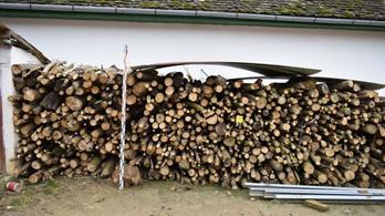 Kivágta a szomszéd földről a fákat, mert nem tudta művelni tőlük a földet