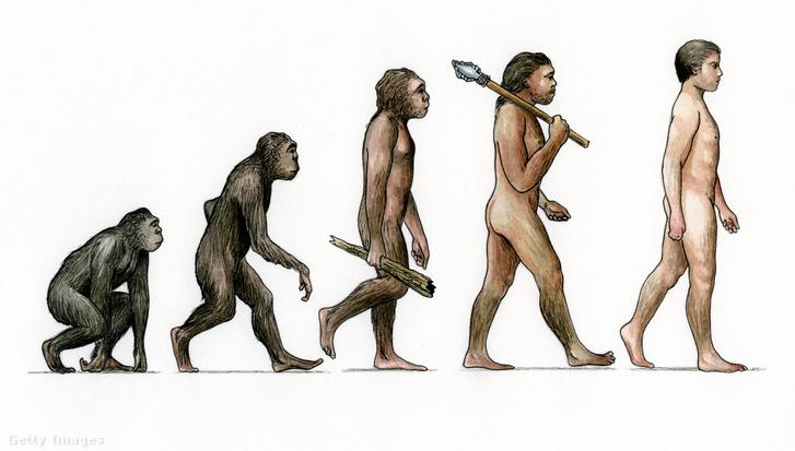 Evoluciós ábra Karen Humpage művész tollából