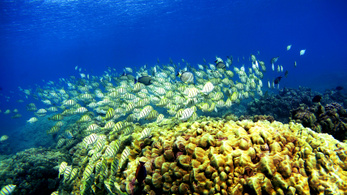 Az évszázad végére kipusztulhat a világ összes korallzátonya