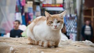 Miért rajongtak az ókori egyiptomiak a macskákért?