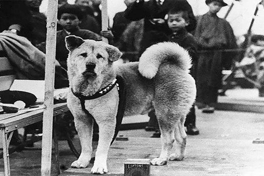 Őt tartják a világ leghűségesebb kutyájának: megható a története