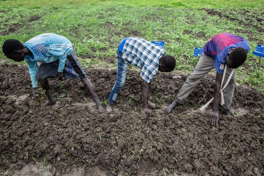 Volt gyerekkatonák tanulnak mezőgazdasági ismereteket egy dél-szudáni iskolában 2018 júniusában.