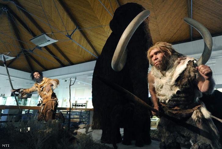 Egy mai ember (Homo sapiens balról) és egy neandervölgyi ember (Homo neanderthalensis) mamutvadászatát bemutató modellek a Magyar Természettudományi Múzeum Sokszínű ÉLET - Felfedező úton Magyarország tájain című kiállításán 2011. február 25-én.