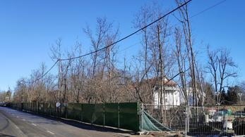 Fényképekkel bizonyítják, hogy a tiltás ellenére vágták ki a fákat a Normafán