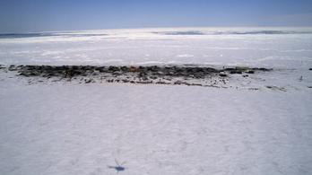 Mintha csak tegnap fagyott volna meg a 46 ezer éves pacsirta Szibériában
