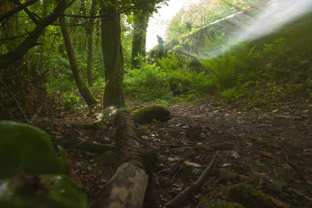 Az előbbi fotóhoz egy ösvényen kellett sétálgatnom elég hosszan. Utam során gyönyörködtem a meseszerű erdőben és csodás páfrányokban, közben pedig készítettem néhány hosszú záridős képet. Köztudott, hogy a Man-sziget a mondák és furcsa történetek melegágya, ahol egykor még tündérek is laktak. Ezért kérem ne kérdezzék, mi az a fehér suhanás a fotón. Egyedül voltam, teljesen egyedül abban a pillanatban, és kissé beleborzongtam, amikor visszanéztem
