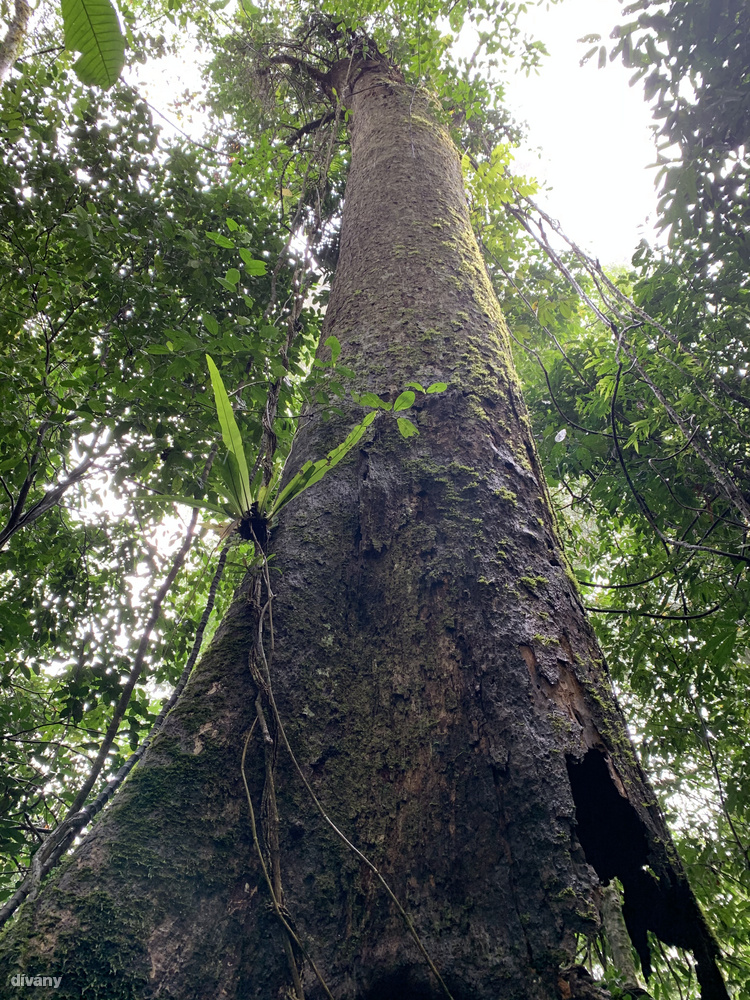 ...ahol igen ritka növényfajokkal is lehet találkozni