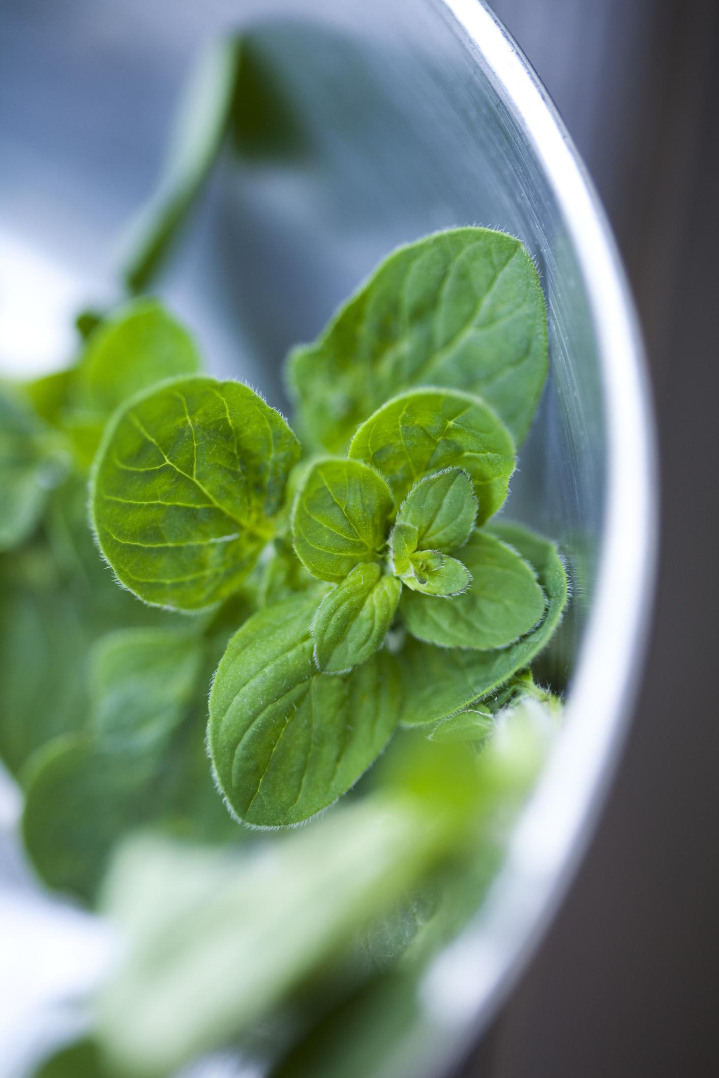Melyik fűszert látod a képen növényként?
