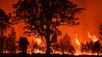 Sokkal durvábbak voltak az ausztrál bozóttüzek, mint gondoltuk