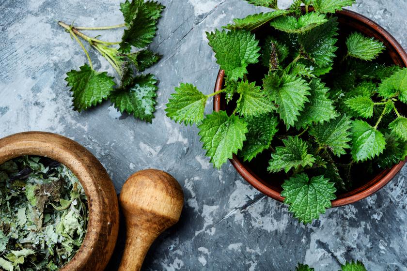 Az egyik legerősebb salaktalanító gyógynövény, ami segíti a fogyást: így fogyaszd a csalánt